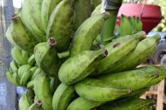 banana-sooty-blotch_25435851983_o