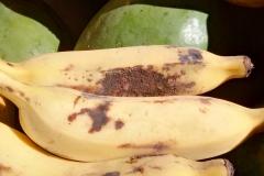 banana-sugarcane-bud-moth-injury_25233718376_o