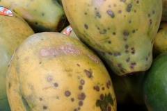 papaya-carica-papaya-fruit-spots_27278818446_o