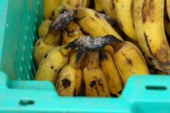 banana_crown_rot_incipient_5681920764_o