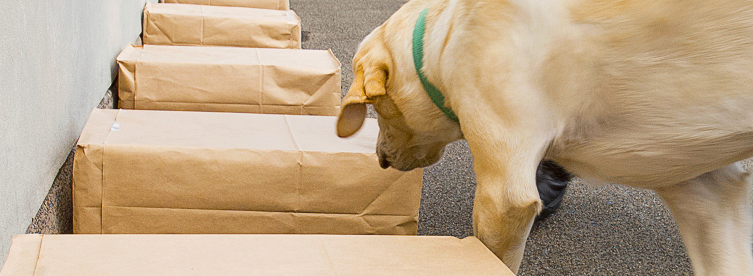 Dog sniffing packages