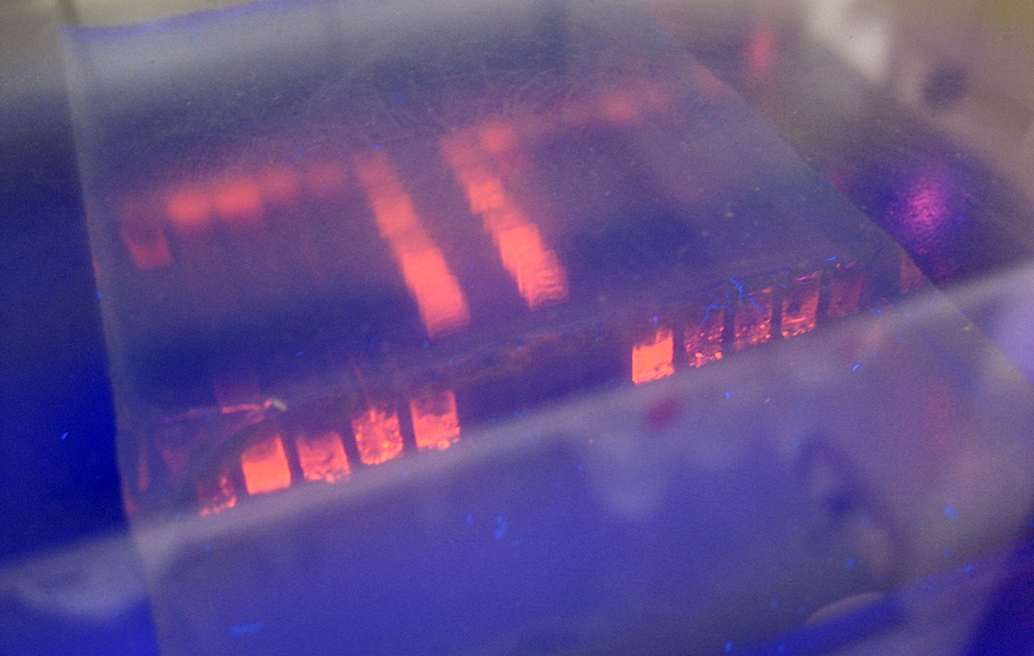 <p><strong>Fig. 2.32.</strong>&nbsp;(<strong>B</strong>) Agarose gel made from red algae is used in electrophoresis, which is a laboratory method for separating large molecules like DNA and RNA.</p>