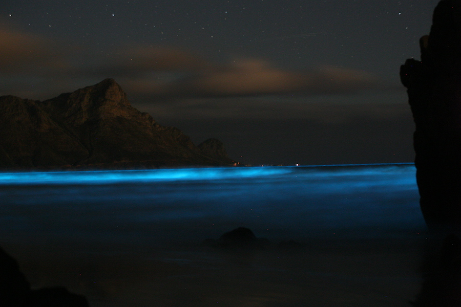 "<p><strong>Fig. 2.35.</strong>&nbsp;(<strong>B</strong>) Bioluminescent dinoflagellates produce ""blue tides"" when agitated by crashing waves at night.</p>"