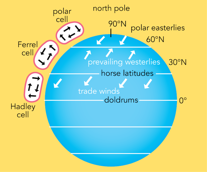 Circulation Cells And Prevailing Wind Belts P Strong Fig 3 10 Strong Global Atmospheric