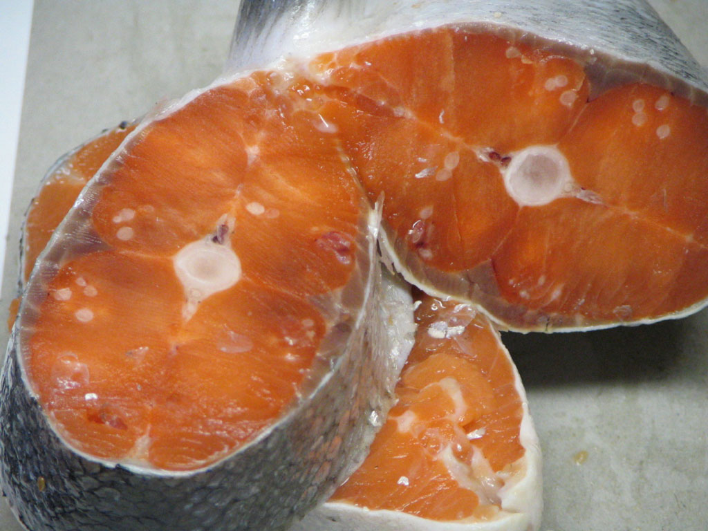 <p>(A) Side view of salmon skeletal</p>