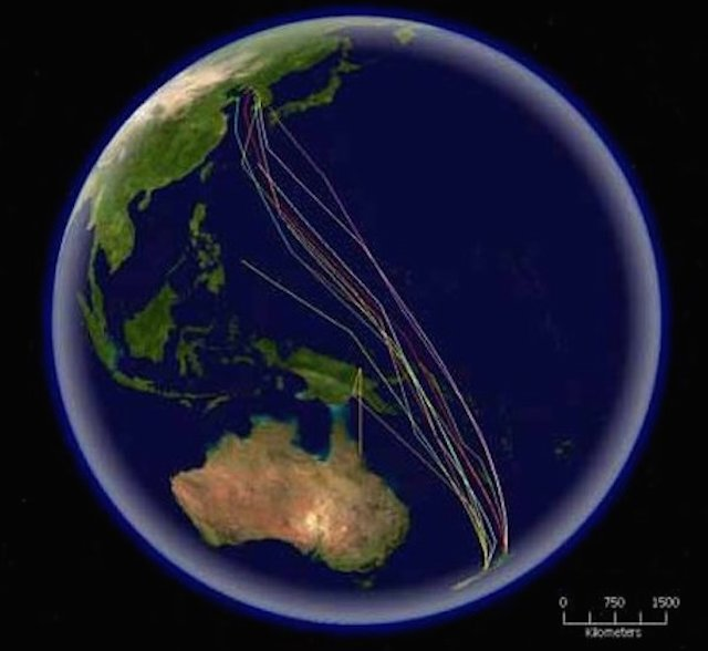 <p><strong>Fig. 5.54.</strong>&nbsp;(<strong>B</strong>) Map of routes taken by tagged bar-tailed godwits migrating from New Zealand to the Yellow Sea, northwestern Pacific ocean basin</p>