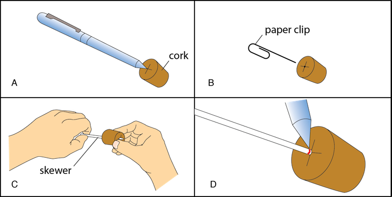 <p><strong>Fig. 2.16.</strong> Make the scale-and-cork assembly by (<strong>A</strong>) marking the center of the cork (<strong>B</strong>) starting a hole in the cork with a paper clip (<strong>C</strong>) inserting the skewer into the cork and (<strong>D</strong>) darkening the mark at which the skewer meets the cork.</p>