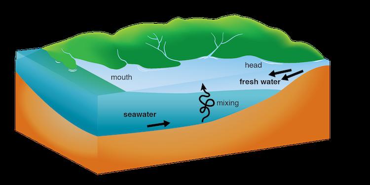 Image Gallery estuary diagram
