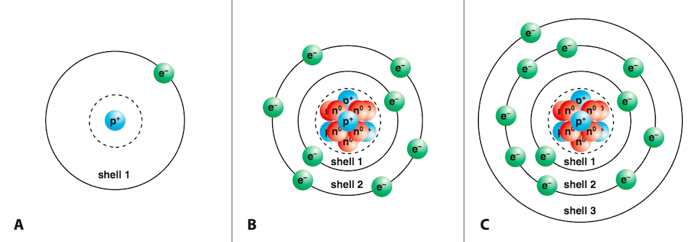<p><strong>Fig. 2.21.</strong>&nbsp; (<strong>A</strong>) Hydrogen atom (atomic number 1, 1 proton, 1 electron) (<strong>B</strong>) Oxygen atom (atomic number 8, 8 protons, 8 electrons). Note that not all of the protons and neutrons are visible. (<strong>C</strong>) Sodium atom (atomic number 11, 11 protons, 11 electrons) Note that not all of the protons and neutrons are visible.</p>