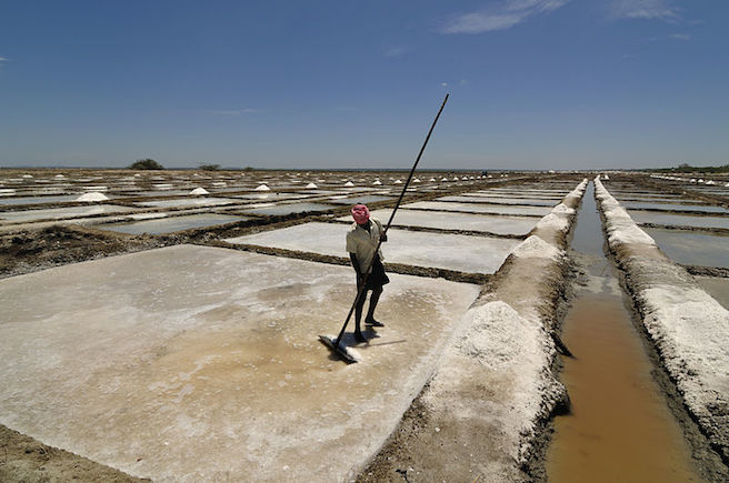 <p><strong>SF Fig. 2.6 </strong>(<strong>B</strong>) Raking the top of the salt ponds in Marakkanam in Tamil Nadu, India.</p>