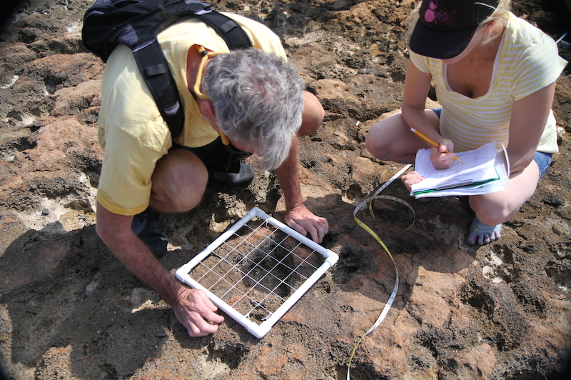 <p><strong>Fig. 2.6. </strong>(<strong>B</strong>) Ecologists using a quadrat to sample and count intertidal organisms.</p>