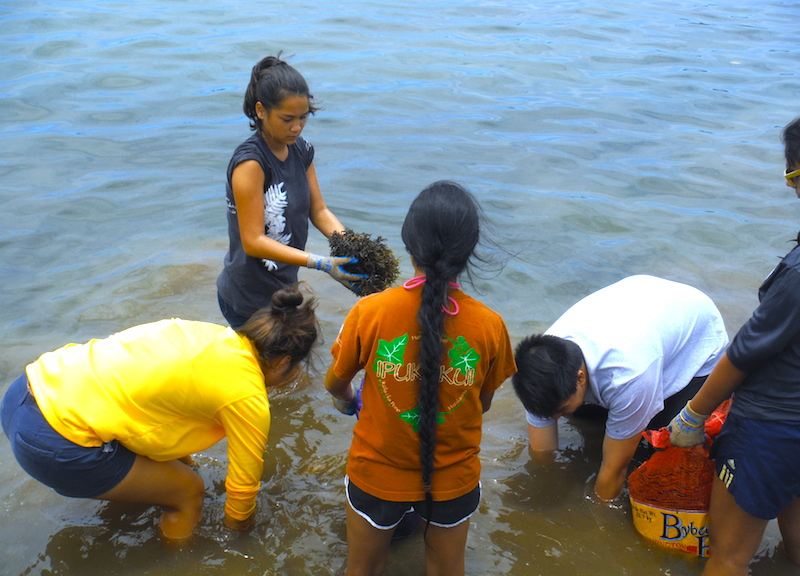 <p><strong>SF Fig. 2.6.</strong> (<strong>C</strong>) Students from local community group Nā Pua No'eau remove invasive algae near the shoreline.</p>
