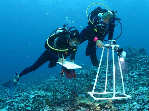 <p><strong>SF Fig. 9.1.</strong> (<strong>A</strong>) Marine biologists use photoquadrats to record species diversity and percent coral cover underwater at the Papahānaumokuākea Marine National Monument in Hawai'i.</p>