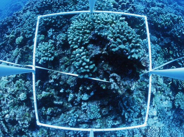 <p><strong>SF Fig. 9.1.</strong> (<strong>B</strong>) A photoquadrat image was taken by US Fish and Wildlife Service biologists at Jarvis Island in the central Pacific ocean basin.</p>