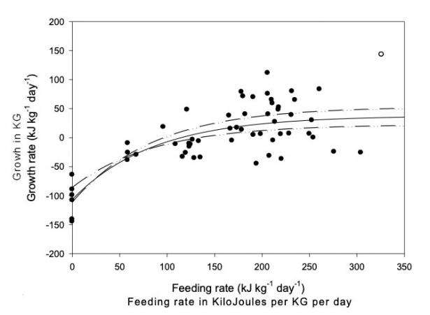 <p><strong>Fig. 4.67.</strong> Growth rates of young hammerhead sharks (S. lewini) level off even with increasing amounts of food.</p><br />