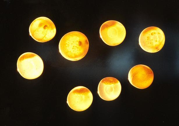 <p><strong>Fig 4.68.</strong> Salmon eggs in different stages of development.</p><br />