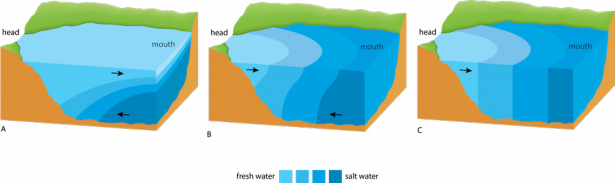 <p><strong>Fig. 2.25.</strong> Vertical salinity profiles for three types of estuaries (A) salt-wedge, (B) slightly stratified, and (C) vertically mixed.</p><br />