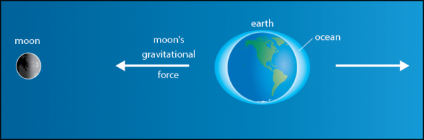 <p><strong>Fig. 6.5.</strong> The moon's gravitational force acting upon the ocean causes lunar tides. Tidal bulges in the ocean are exaggerated in this figure to show the effects of gravitational forces.</p><br />