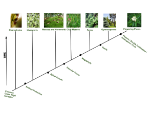 <p><strong>Fig. 2.30.</strong> Evolutionary history of plants</p><br />