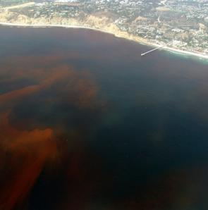 <p><strong>Fig. 2.37.</strong> (<strong>A</strong>) A red tide is seen off the coast of La Jolla, California.</p><br />