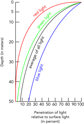 <p><strong>Fig. 2.44.</strong> The penetration of sunlight decreases rapidly with depth. Blue wavelengths of light penetrate the farthest, and red light penetrates the least.</p>
