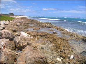 <p><strong>Fig. 3.31.</strong> Tidepools at Barber's Point, O'ahu, Hawai'i</p><br />