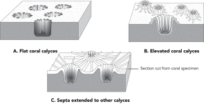 <p><strong>Fig. 3.33.</strong> Arrangement of septa in some colonial corals</p><br />
