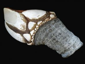 <p><strong>Fig. 3.79.</strong> (<strong>C</strong>) Goose neck barnacle (<em>Pollicipes pollicipes</em>)</p><br />