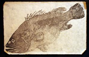 <p><strong>Fig. 4.19.</strong> A <em>gyotaku </em>print of a longtooth grouper</p>