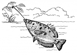 <p>Fig. 4.66. (A) an Archer fish (Toxotes microlepis) feeds by shooting fish with streams of water and can bring down insects up to 3 m above the water's surface.</p><br />