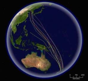 <p><strong>Fig. 5.54.</strong>&nbsp;(<strong>B</strong>) Map of routes taken by tagged bar-tailed godwits migrating from New Zealand to the Yellow Sea, northwestern Pacific ocean basin</p><br />