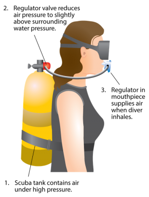 <p><strong>Fig. 9.24.</strong> A scuba regulator adjusts the pressure of air inhaled by a diver so that it is about equal to the pressure of the surrounding water.</p><br />