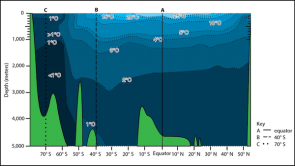 <p><strong>Fig. 2.10.</strong> Idealized vertical temperature profile of the Pacific ocean basin showing water in blue and seafloor features in green. The highest, or warmest, water temperatures are shown in light blue. The lowest, or coldest, water temperatures are shown in dark blue.</p><br />