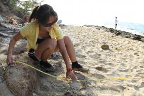 <p><strong>Fig. 5.23.</strong> A scientist studies the rock and sand substrate at an intertidal site.</p><br />