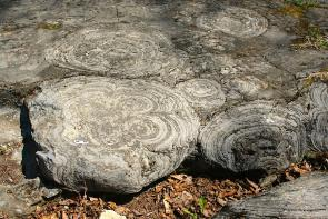 <p><strong>Fig. 7.8.</strong> (<strong>A</strong>) Stromatolites at Lester Park, Saratoga Springs, New York. The white bar represents 3 cm</p><br />