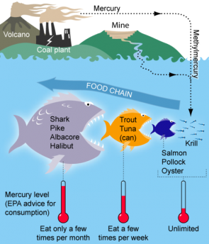 <p><strong>Fig 2.17.</strong> A diagram shows how mercury moves from land through a food chain in the ocean.</p><br />