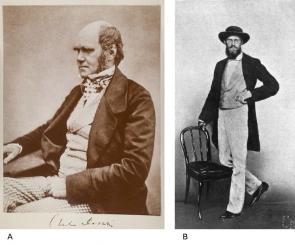 <p><strong>SF Fig. 1.3.</strong> Pioneering scientists in evolutionary biology (<strong>A</strong>) Charles Darwin at age 45 in 1854 (<strong>B</strong>) Alfred Russell Wallace at age 39 in 1862</p><br />