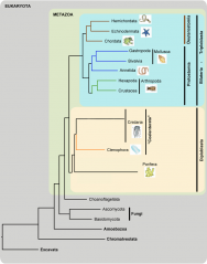 "<p><span style=""font-size: 13.008px;""><strong>Fig. 3.4.</strong> Phylogeny of major phyla within the kingdom Animalia</span></p>"