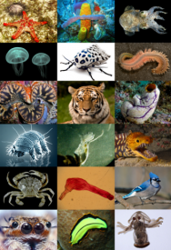 <p><strong>Fig. 3.7.</strong> Diversity of animal body plans</p><br />
