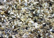 <p>Sediment made from a variety of crushed bivalve shells, Catawba Island in Port Clinton, Ohio</p><br />