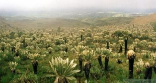 Ecuadorians disproportionately select non-native plants for medicinal use