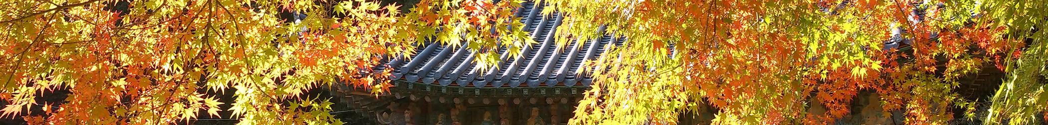 autumn-1514177