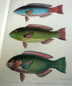 Library Treasures on the Bridge Color Fish Image