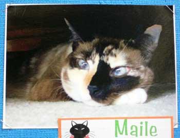 Na Popoki i ka Hale Waihona Puke Cat