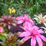 A colorful assortment of bromeliads