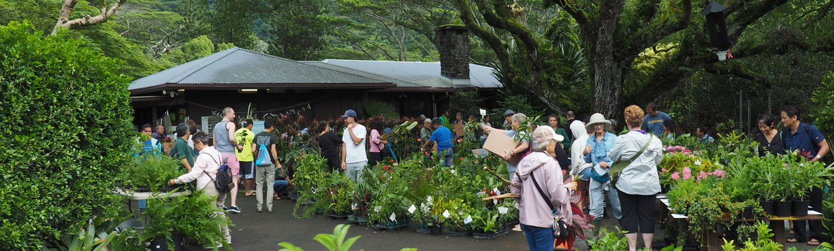People buying plants