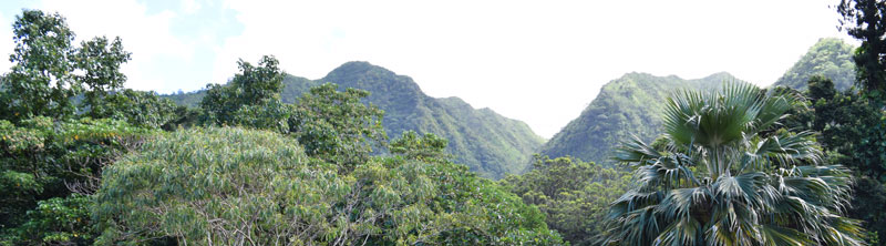 The ridgeline from an overlook in the Native Hawaiian Garden