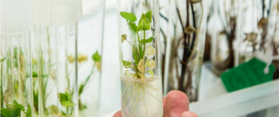 A plant grows in a test tube