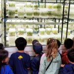 Children peer into a lab filled with plant in test tubes