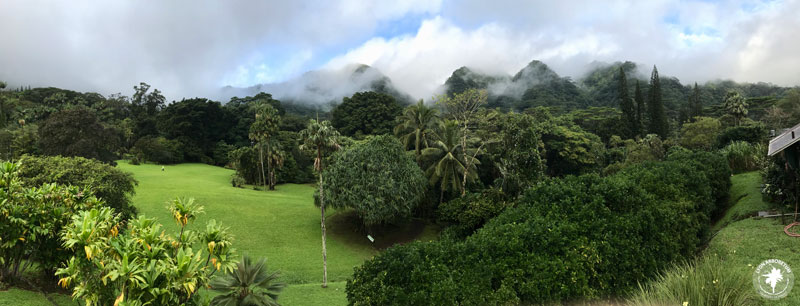 panorama of Lyon Arboretum's lush landscape with mountains in background, shrouded in clouds